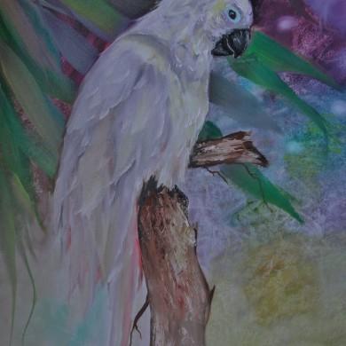 Kakadu, Jenkins Art